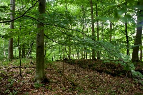 Hareskoven skov tur